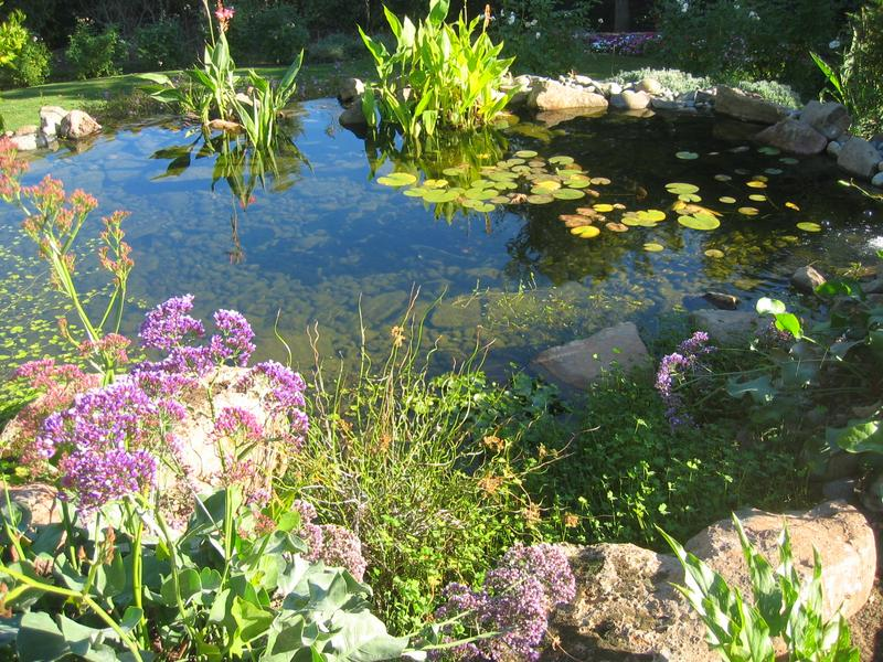 Koi ponds water gardens for Koi and water garden